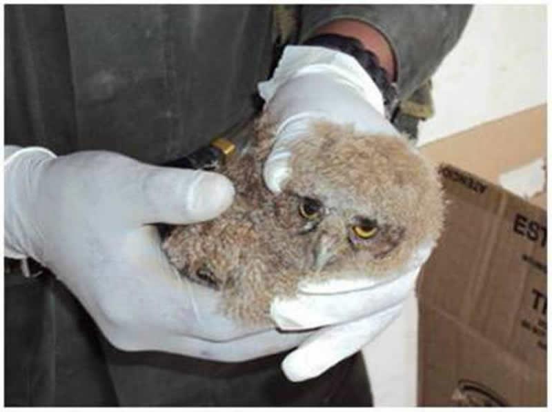 Policía Nacional Mantiene Los Operativos Para Contrarrestar El Tráfico De Fauna Silvestre