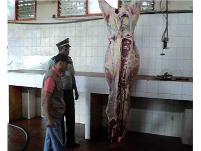 Policia Nacional Se Incautó De 200 Kilos De Carne De Res