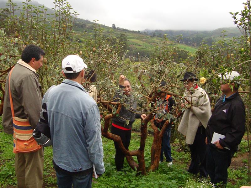 Durazneros De La Provincia Visitan Boyacá