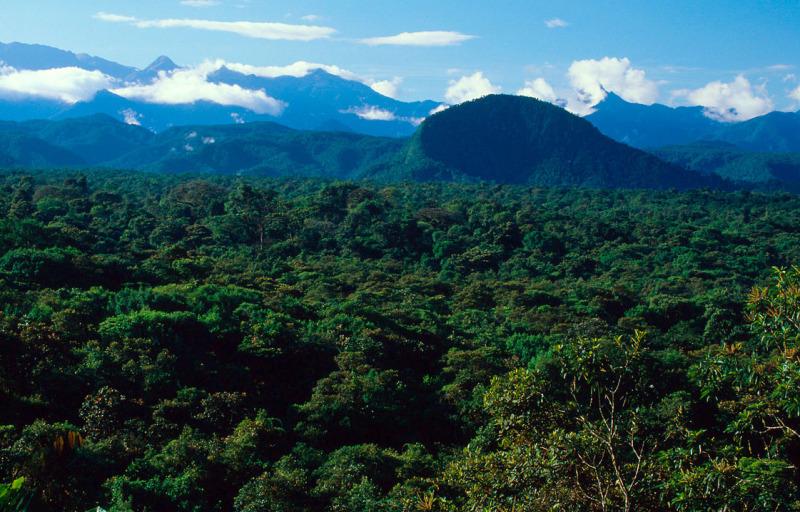 La Planada Nature Reserve, Colombia