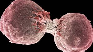 Inmunoterapia: El tratamiento contra el cáncer que sustituirá a la ...