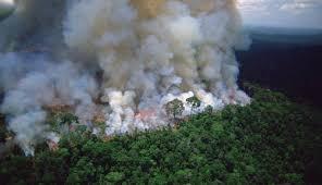 Colombia perdió más de 158.000 hectáreas de bosques por ...